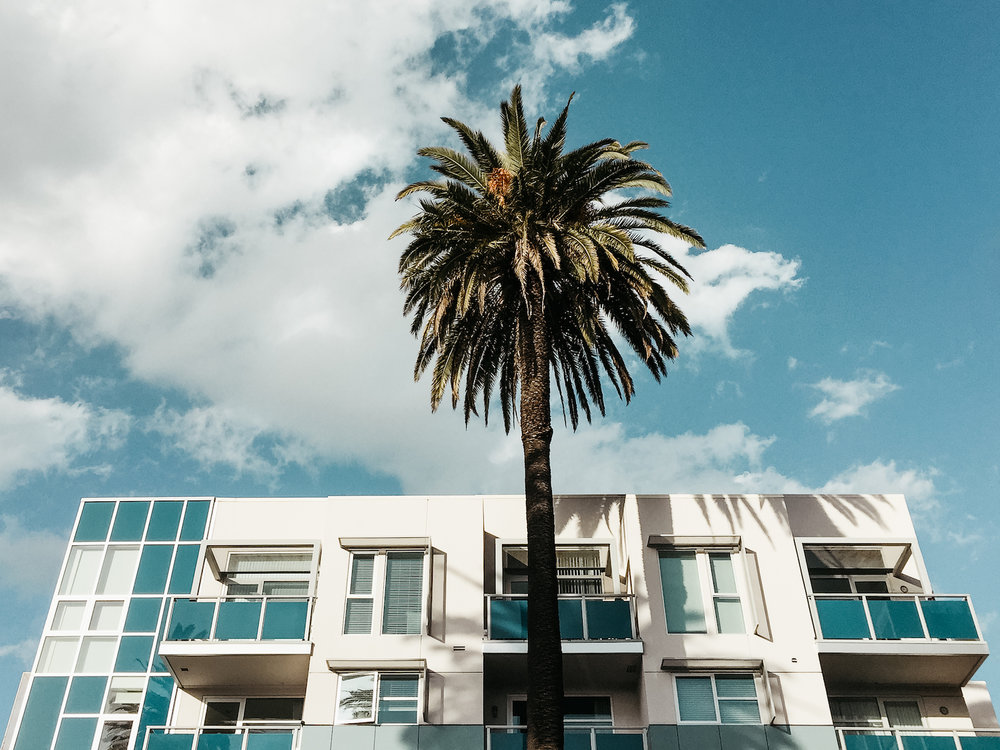 Lost in Los Angeles Photo Series. Photo of a single palm tree against a blue sky with a blue and white contemporary apartment building.
