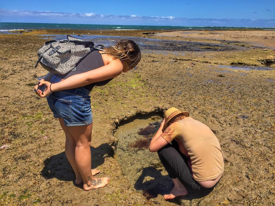 blue-ring-octopus-torquay
