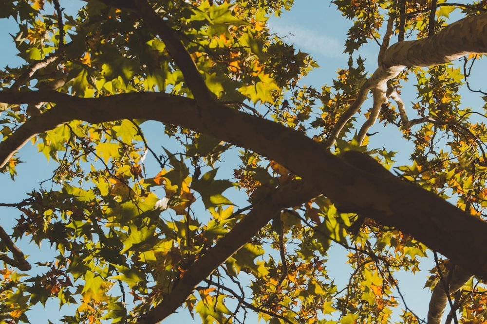 Leaves of autumn against a blue sky in Krka National Park Croatia. Photo taken with Canon 650D Rebel T4i, edited in Lightroom. Get the free Krka lightroom preset with cool highlights, warm shadows, and a gentle fade.