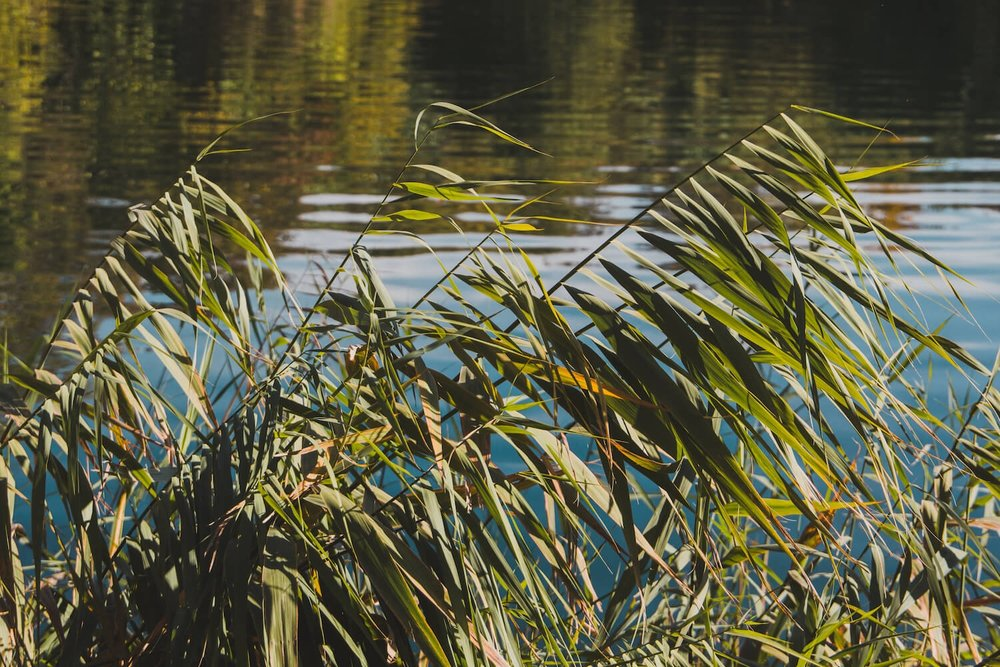 Reeds and Long Grass in a pond in Krka National Park Croatia. Photo taken with Canon 650D Rebel T4i, edited in Lightroom. Get the free Krka lightroom preset with cool highlights, warm shadows, and a gentle fade.