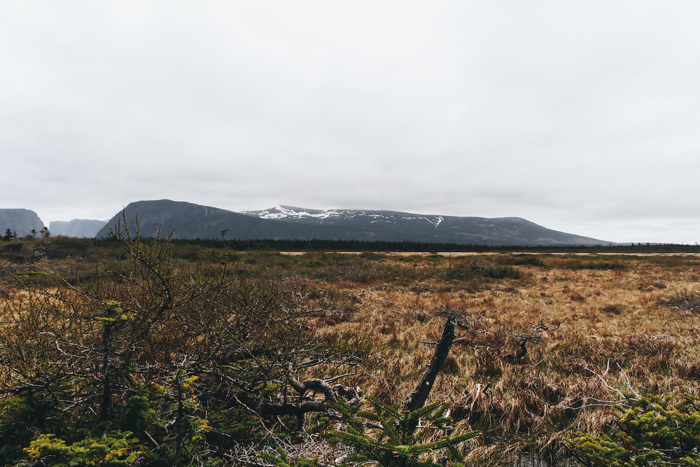 Photo of Gros Morne Nation Park in northeastern Canada. Photo of Gros Morne Nation Park in northeastern Canada. Dark golden grasslands stretch out over Marsha nd toward the mountains that make up Gros Morne Fjord.