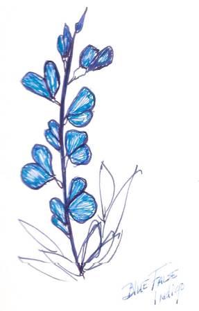 drawingFalse Blue Indigo