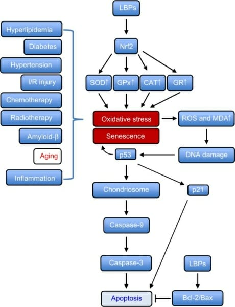 LBP Functions