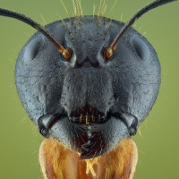 Extreme Bug Photography