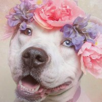 One Look at These Images and You'll Never be Afraid of Pitbulls Again
