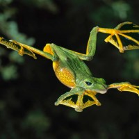 Feeling Froggy? Check Out This Gallery of Unusual Frogs