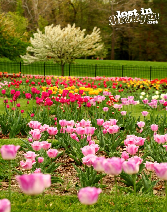 dow gardens in Midland Michigan