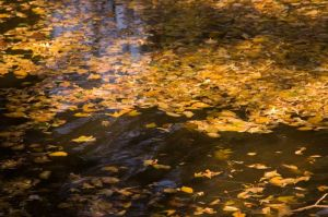 Fall on the Water