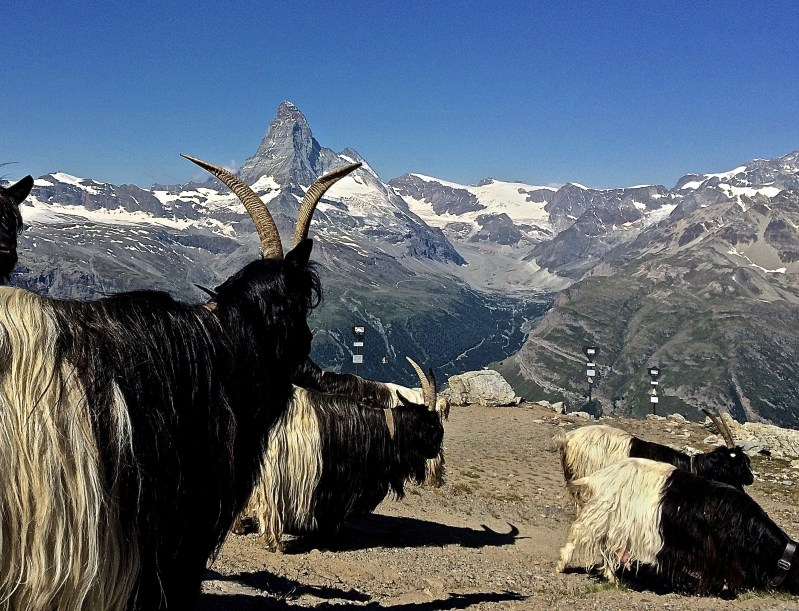 You don't necessarily have to go on a guided tour in Zermatt. There are countless hiking trails you can tackle on your own.
