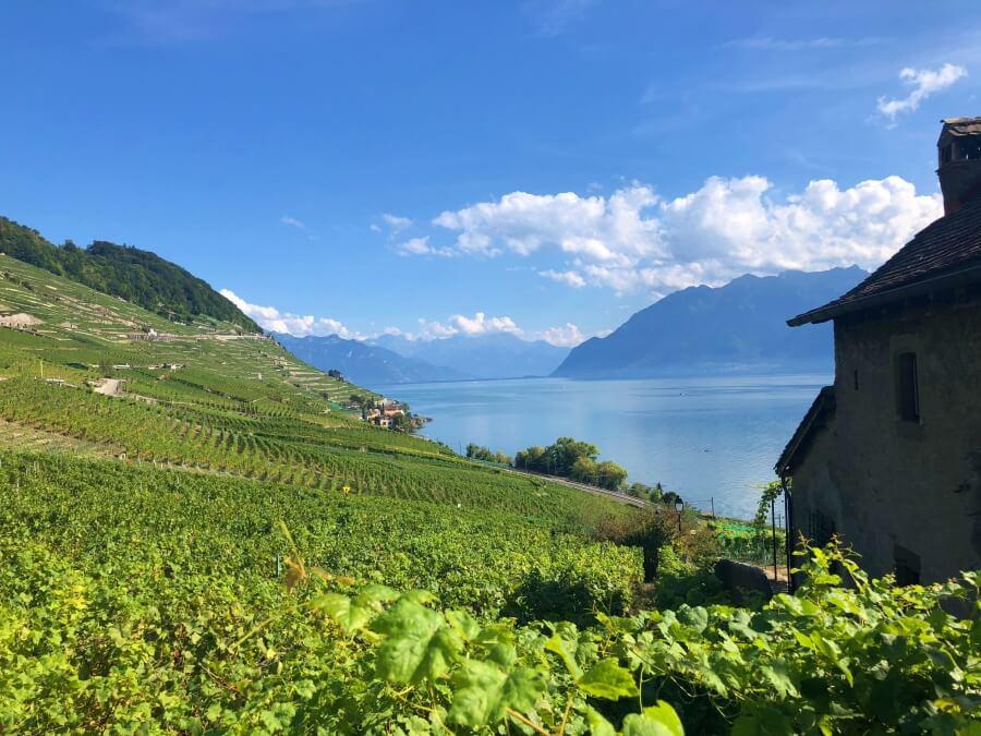 Lavaux Unesco vineyards