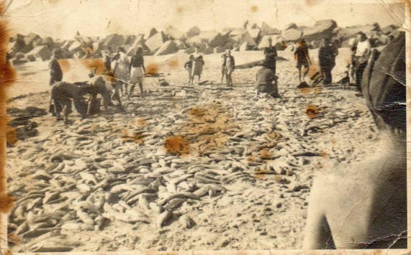 Stockton fish haul 1945