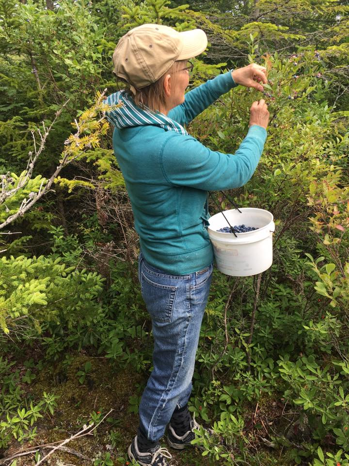 woman picking blueberries in Nova Scotia in the forest with white bucket