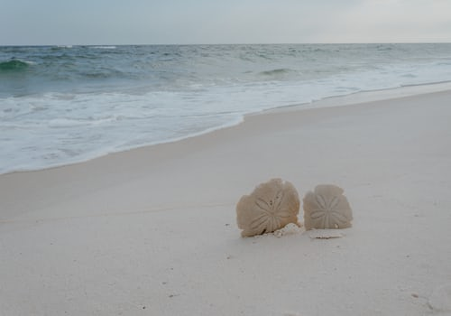 beach with white sand and sand dollars