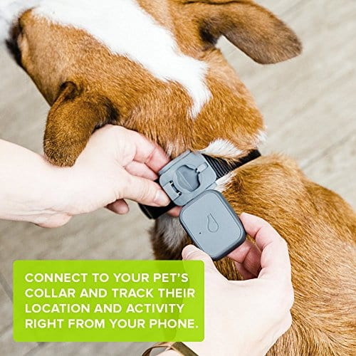 Whistle-3-GPS-Pet-Tracker-Activity-Monitor-0-0