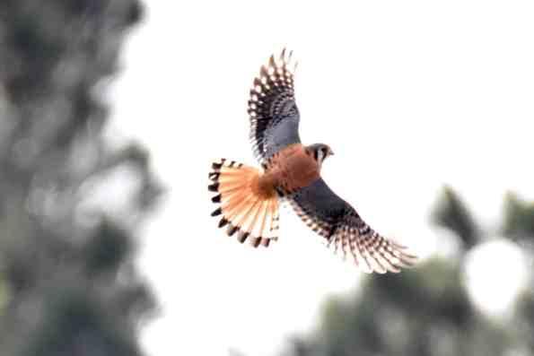 Birds of Prey at Little Piney Bastrop Texas