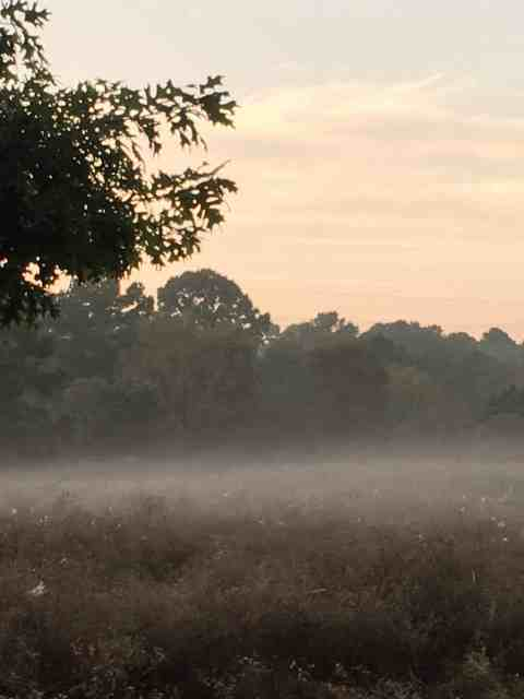 MagicalMagical morning at Little Piney Bastrop birding