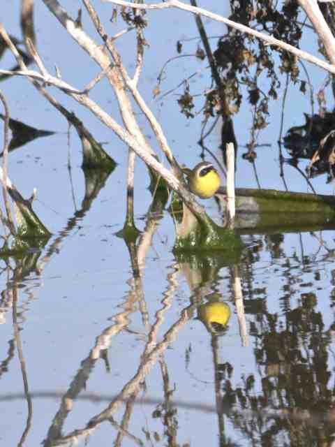 birding loop road and shipp/stagner lake