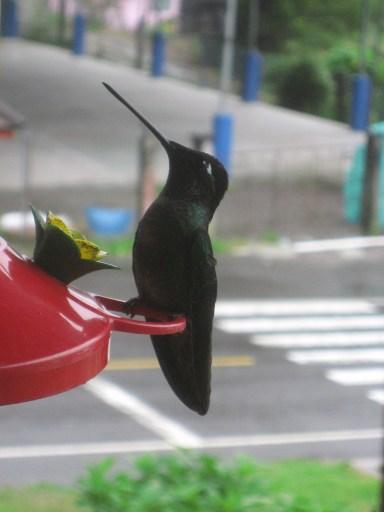 11 Hummingbird