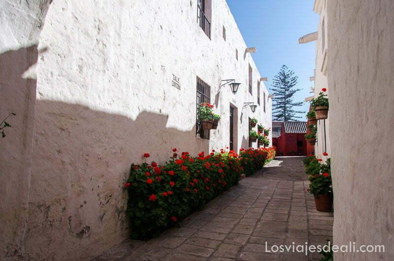 calle de casas encaladas y tiestos de geranios rojos