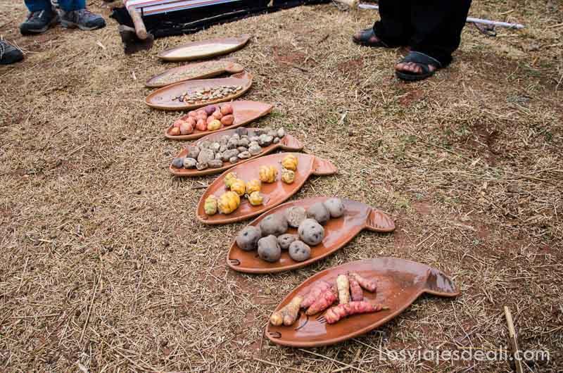 bandejas de cerámica cada una con distintos tipos de papas en la península de capachica