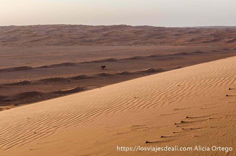 curva de duna de arena enrojecida por atardecer y al fondo una pequeña acacia