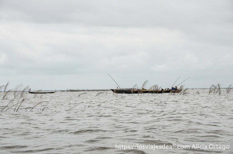 barca muy plana en el horizonte y algunas plantas acuáticas en el agua ganvie