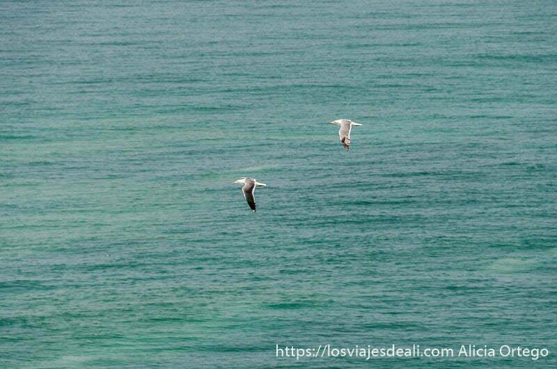 dos gaviotas blancas volando sobre el mar de color verde intenso visitas que hacer cerca de salalah