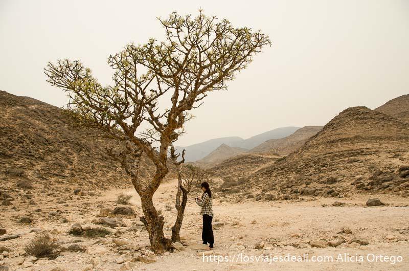 marita junto a un árbol de incienso visitas que hacer cerca de salalah