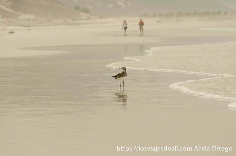 gaviota posada en la arena junto a la orilla del mar visitas que hacer cerca de salalah