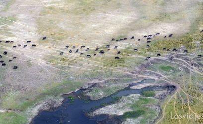 vuelo sobre el delta del okavango