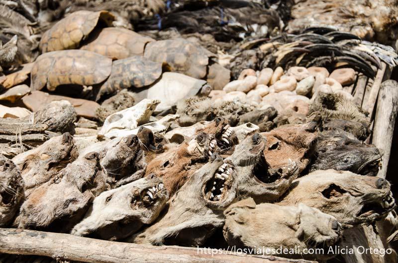 cabezas de animales disecadas y caparazones de tortuga en el mercado de fetiches de la capital de togo