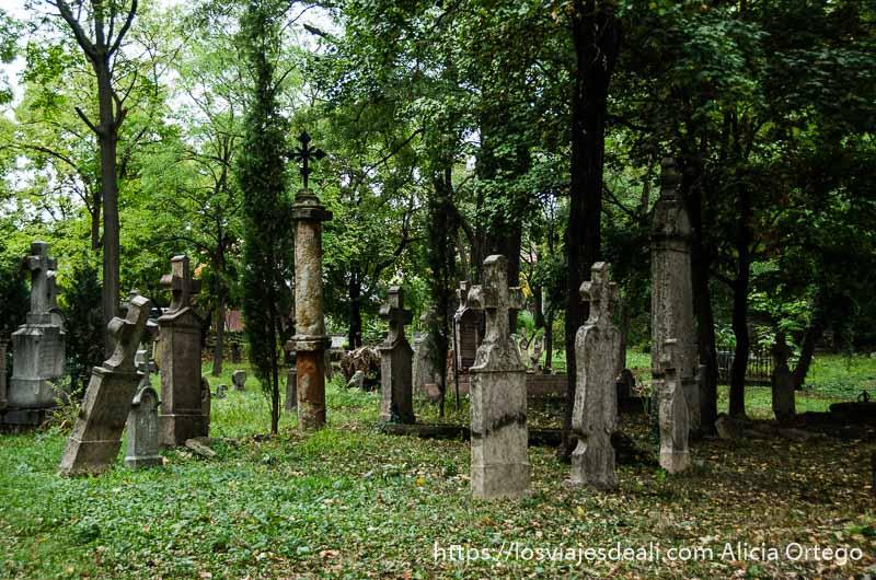 cementerio antiguo de szentendre con grandes cruces de piedra algunas torcidas entre árboles