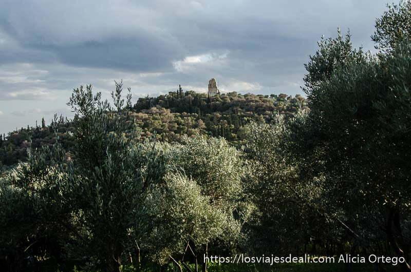 colina con olivos y arriba un monumento Acrópolis de Atenas y su museo