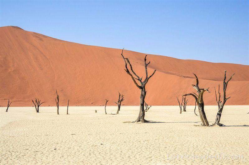 árboles secos y una gran duna de arena naranja que contrasta con cielo muy azul. Lugares que te pueden dejar con la boca abierta.