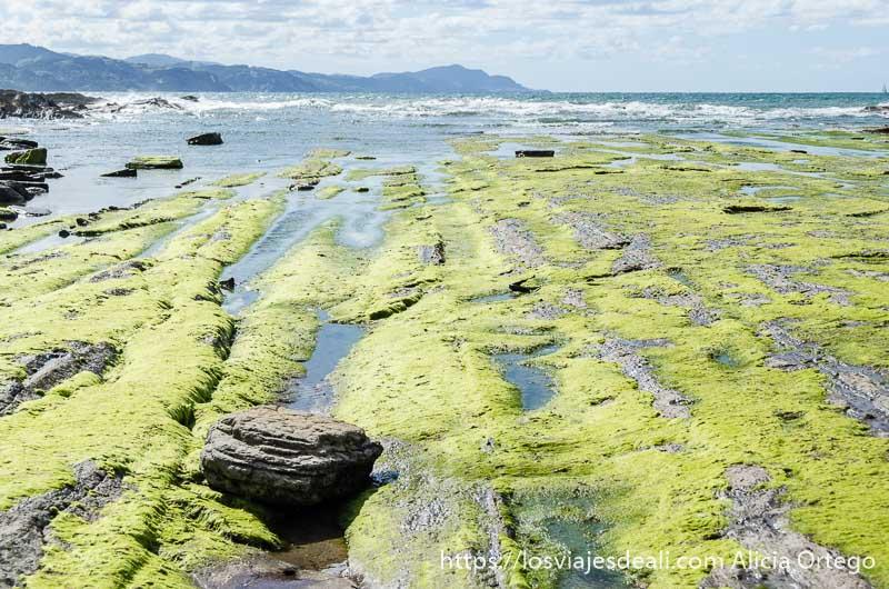 rasas cubiertas de musgo verde y mar al fondo en playa de elgorri zumaia