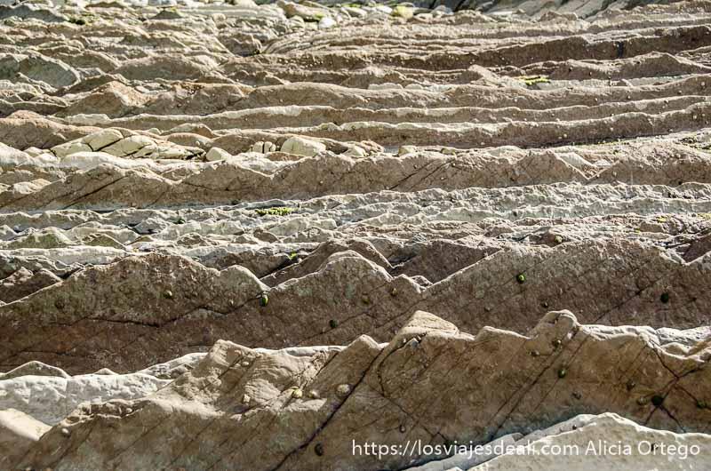 rocas del flysch formando filas dentadas en plaza zumaia