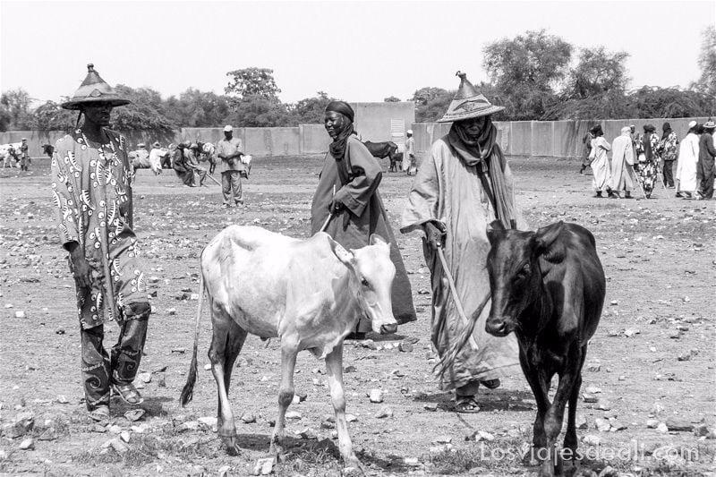 hombres con grandes sombreros de paja y sus vacas en el mercado de Gorom Gorom