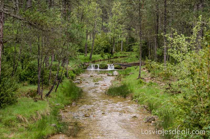 río enmedio del bosque verde qué ver en la provincia de cuenca