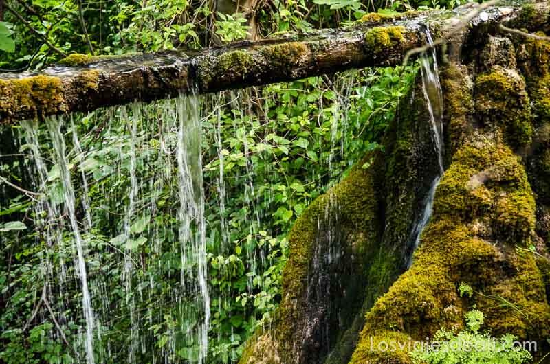 tronco de árbol atravesado en el bosque con agua chorreando qué ver en la provincia de cuenca