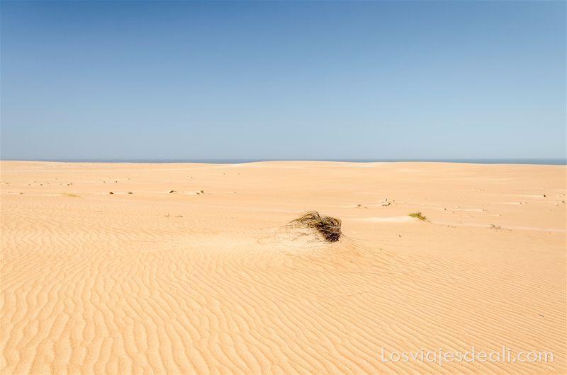 desierto de Omán junto al mar
