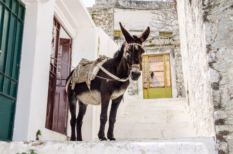 burro amarrado a la puerta de una casa en una calle que sube en escaleras en Filoti