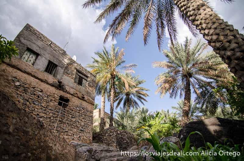 casa y palmeras en oasis de cordillera al hajar
