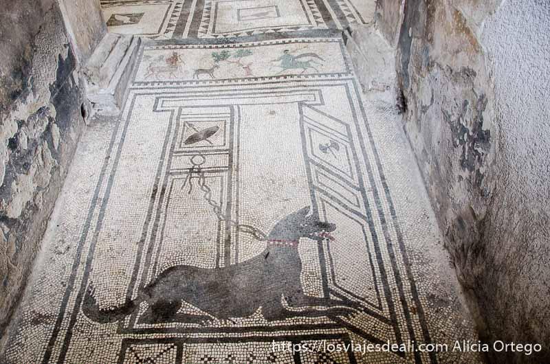 mosaico con figura de perro con cadena en pompeya