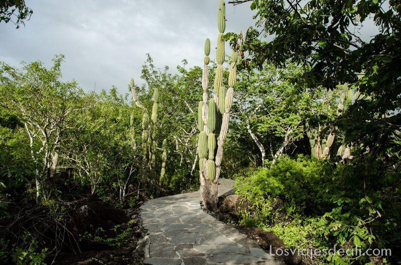isla San Cristóbal cerro de las tijeretas
