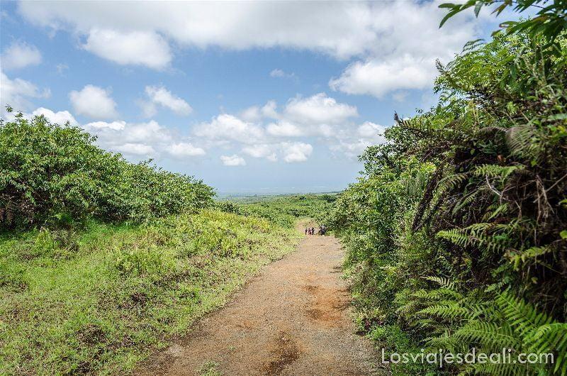 isla isabela camino