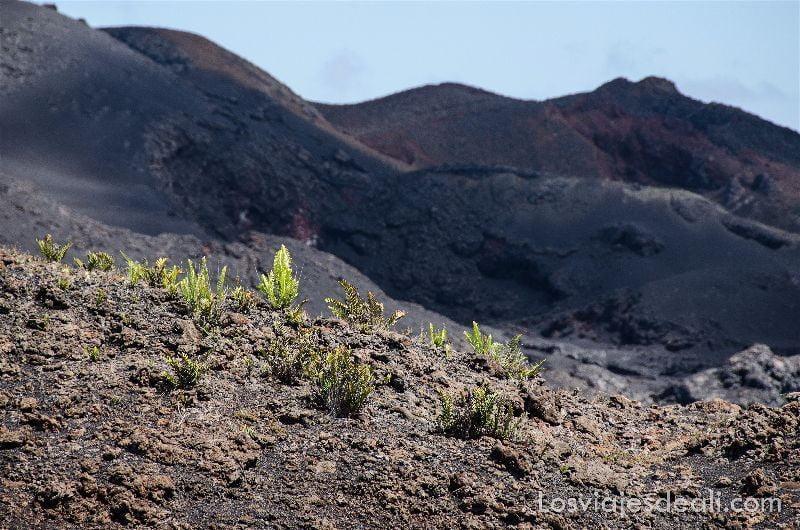 isla isabela helechos y lava