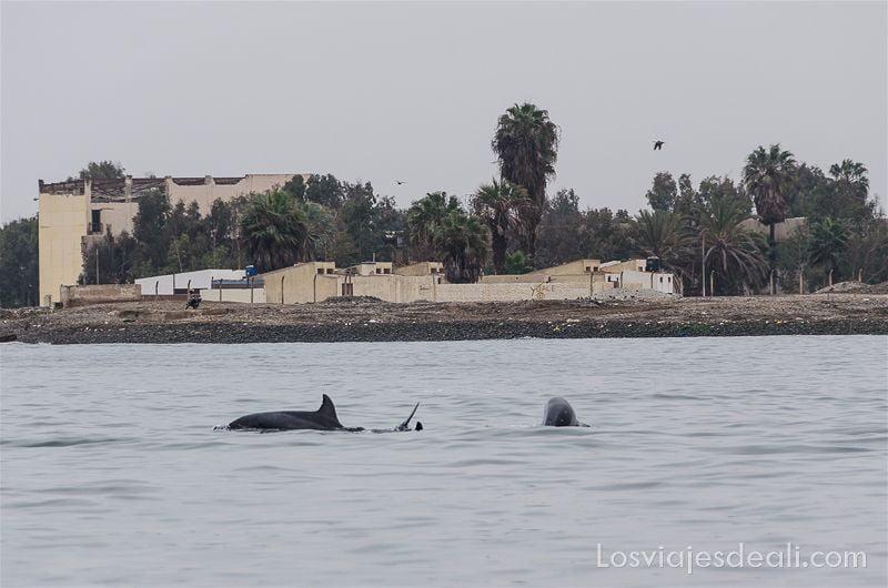 delfín en islas ballestas
