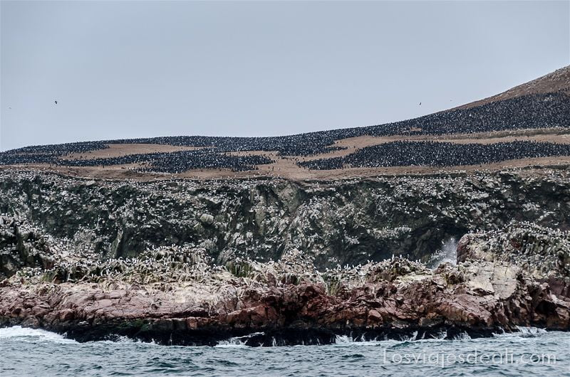 concentración de aves formando manchas oscuras en una isla
