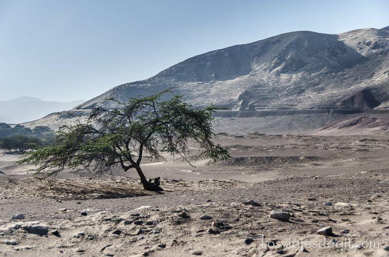 momias de chauchilla paisaje