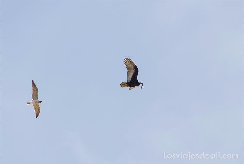 aves en paracas peru